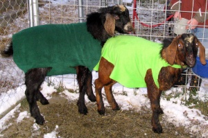 Bucks in polar fleece jackets
