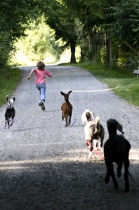 Adrian would bolt down Foxglove Lane, and the goats would tear after him